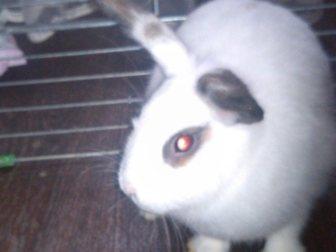 Увидеть изображение Другие животные декоративный кролик с клеткой 33465570 в Арзамасе