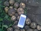 Изображение в Прочее,  разное Разное Продам картофель ! Калибр от 5 и выше, качество в Барнауле 0