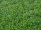 Уникальное фото Ландшафтный дизайн Ландшафтный дизайн, озеленение, благоустройство в Шебекино, Белгород 68638360 в Белгороде