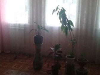 Обменяю дом на 2ком квартиру с индивидуальным отоплением ,2или 3 этаж в районе Поселок ,Крейда  ,Зоря,       41мекраен  ,       Или продам,                      в Белгороде