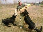 Фото в Собаки и щенки Продажа собак, щенков Дрессировка собак всех пород, постановка в Белореченске 125