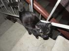Изображение в Потерянные и Найденные Потерянные В подъезде дома уже 3 дня живет котенок (девочка). в Березниках 0