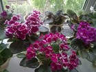 Скачать фото  растения 35835667 в Бузулуке