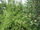 Увидеть фотографию Сады Ухоженный плодоносящий сад в СНТ Березка-1, 2мин езды от Ленинского района, в 100м от оз, Курочкино 68145967 в Челябинске