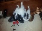 Фото в Собаки и щенки Продажа собак, щенков Мальчик ласковый и веселый. Забавный шалунишка. в Клине 0