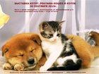 Фотография в Кошки и котята Выставки кошек Осенняя выставка котят и кошек - г. Долгопрудный, в Долгопрудном 50