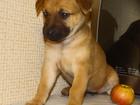 Изображение в Собаки и щенки Продажа собак, щенков Впервые в продаже щенки, полученные методом в Донецке 5000