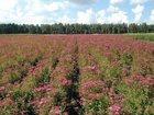 Смотреть foto Поиск партнеров по бизнесу Ищу партнера фермера 32514822 в Екатеринбурге