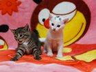 Фото в Отдам даром - Приму в дар Отдам даром Кому котёнка? Девочки, 1 месяц, белая и в в Екатеринбурге 0