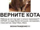 Изображение в Потерянные и Найденные Найденные В середине июня пропал СЕРЫЙ кот, белое пятнышко в Екатеринбурге 0