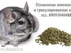 Увидеть изображение  Шиншиллы в рассрочку, предлагаем бизнес на разведении шиншилл 35310187 в Екатеринбурге