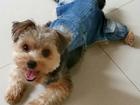 Изображение в Собаки и щенки Одежда для собак Новый, удобный джинсовый комбинезончик для в Екатеринбурге 663