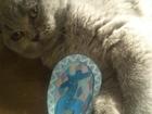 Фотография в Потерянные и Найденные Потерянные Потерялся кот, зовут Черчиль. Серый, британ в Екатеринбурге 0