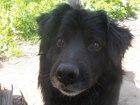 Фотки и картинки Бернская пастушья собака смотреть в Екатеринбурге