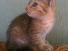 Фото в   Раздаю милых котяток, очень ласковые при в Екатеринбурге 0