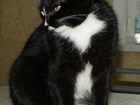 Уникальное foto Найденные Потерялась кошка 37225216 в Екатеринбурге