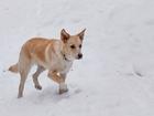 Скачать бесплатно foto Потерянные щенок Джесси 37778606 в Екатеринбурге