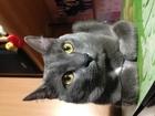 Фото в   Принимаем на своей территории, коту 1, 5 в Екатеринбурге 1000