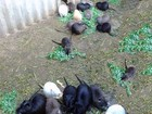 Увидеть foto  диетическое мясо мире нутрии 62703477 в Екатеринбурге