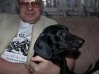 Смотреть фотографию Вязка собак Такса - мальчик ищет девочку , 66495043 в Екатеринбурге