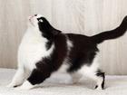 Смотреть фото  Бонита, кошка-милашка с изюминкой, 5 лет 68920540 в Екатеринбурге