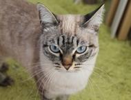 Помогите найти В районе улицы Коуровская потеряна кошка. Если кто нибудь видел,