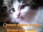 Фото в  Отдам даром - приму в дар Отдаю котенка в месте с шоколадкой, чтоб в Елабуге 0