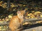 Фото в  Отдам даром - приму в дар отдам ласковых, игривых котят в хорошие  в Ессентуках 0