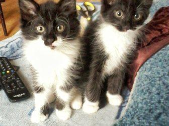 Просмотреть фотографию  Отдам котят 33299363 в Гатчине