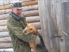 Фото в Потерянные и Найденные Потерянные Патерена собака в районе д. Штанигурт гончей в Глазове 0
