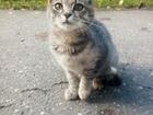 Фото в   SOS! Случилось так, что беременную кошку в Голицыно 0