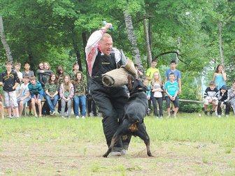 Свежее фото Услуги для животных Дрессировка собак, 33421601 в Хабаровске