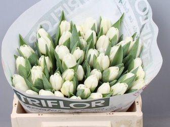 Просмотреть фото  Тюльпаны оптом Хабаровск прямая поставка из Голландии 34530093 в Хабаровске