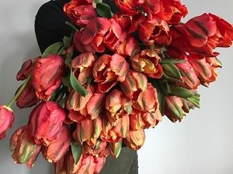 Просмотреть foto Растения Тюльпаны оптом Хабаровск – прямая поставка из Голландиив Хабаровске 55223269 в Хабаровске
