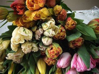Свежее фотографию Растения Тюльпаны оптом Хабаровск – прямая поставка из Голландиив Хабаровске 55223269 в Хабаровске
