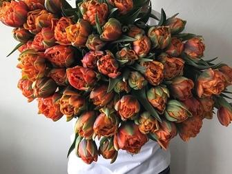 Уникальное фотографию Растения Тюльпаны оптом Хабаровск – прямая поставка из Голландиив Хабаровске 55223269 в Хабаровске
