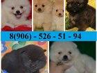 Изображение в Собаки и щенки Продажа собак, щенков ШПИЦА щеночков разных окрасов продам недорого в Иваново 9000