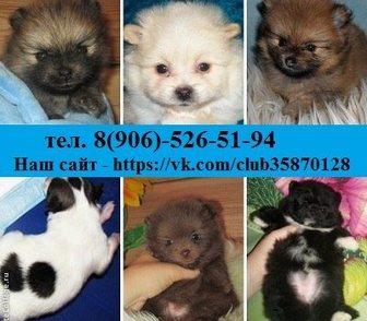 Фотография в Собаки и щенки Продажа собак, щенков Недорого в продаже по хорошим ценам 0т 8500 в Иваново 8500