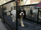 Фото в Собаки и щенки Выставки собак Приглашаем в новый специально оборудованный в Ижевске 0