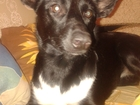 Фотография в   Отдам собаку в хорошие руки. (Дворняжка). в Ижевске 0