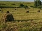 Уникальное фото Корм для животных Сено в тюках 18-20 кг 36311397 в Ижевске