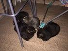 Скачать бесплатно фотографию  Ищут дом 4 замечательных котенка 36747165 в Ижевске