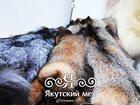 Смотреть фото  Шкуры полярного волка, рыси, лисы и многое другое 32358092 в Якутске