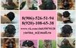Продам недорого чистокровных щеночков немецкой
