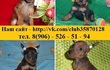 Продам по минимальным ценам хорошеньких щеночков