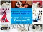 Изображение в Собаки и щенки Продажа собак, щенков ХАСКИ красивеееееенных черно-белых голубоглазых в Ярославле 123