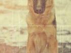 Смотреть изображение  Дрессировка собак и фотосессии собак 38734375 в Ярославле