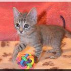 Котенок в добрые руки, Ласковый и нежный Филя
