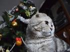Изображение в Кошки и котята Корм для кошек Коту скоро 3 года. Вислоухий. Окрас Вискас. в Элисте 700