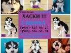 Фото в Собаки и щенки Продажа собак, щенков Продам чёрно-белых голубоглазых щенков хаски! в Калуге 0